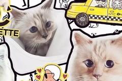 老佛爷去世,他那只年挣300万欧元的猫将继承他的遗产?!