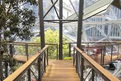 亚马逊豁出去了,把热带雨林搬进了办公楼...员工:我是该加班还是不加班...