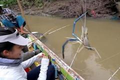 湄公河钓虾真过瘾,一斤多的淡水虾简直挑战你的想象!