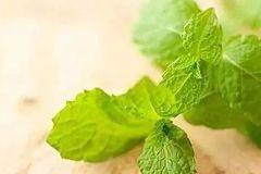 养生 | 春天必吃的14种野菜,鲜美可口又有益!要多吃