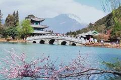 樱花三月,我在丽江等你