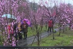 第二十届飞龙峡桃花节开幕
