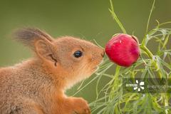 赏花正当时 围观小动物细嗅花香心都融化了!真是太可爱了