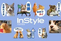 你喝你的猫爪杯 我要去日本离岛找猫玩!