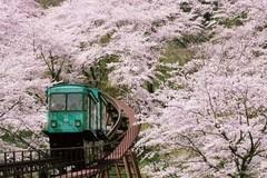 不能去日本看樱花,涂上樱花色唇膏也很美!