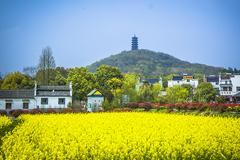 在江南桠溪国际慢城,只想送你一世不会凋谢的金花