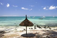 在马尔代夫与绿海龟来一场预约邂逅,亲眼目睹小海龟孵化出壳过程