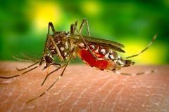 常见网红防蚊方法,便宜靠谱的只有这些!