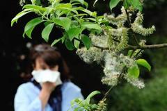 过敏季 | 学会5招,过敏的人也可以安度花粉季