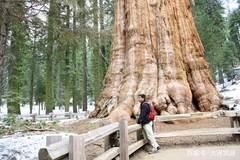 世界上最大的树,20人才能合抱住,重量相当于15头长30米的蓝鲸!