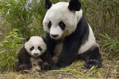 """世界上""""冒充熊猫""""的动物,让人是脑洞大开,游客:想熊猫想疯了"""