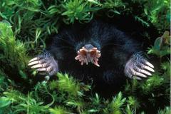 世上进食最快的动物,独特的花鼻子长有22只触手,能在水下闻气味