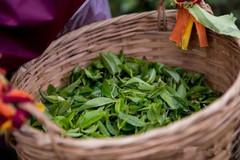 六堡茶有农药吗?六堡茶的农残问题严重吗?
