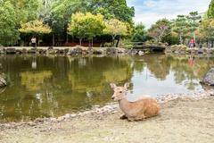 日本关西最出名的公园,鹿、樱花和红叶是主角!