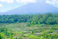 暑期招募??巴厘岛 | 为什么全世界的人都爱巴厘岛?