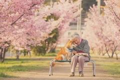 樱花树下85岁奶奶和柴犬一张照片 获34万人点赞!