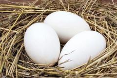 怀孕到了几个月吃鹅蛋好?孕妈吃鹅蛋对自己和胎儿的好处,别忽视