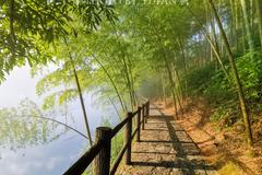 雾漫小东江的正确打开方式,不只江面薄雾与渔船,更有步道美如画