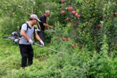 为什么杂草总打不掉?如何高效除草?一位70岁的农民总结了经验
