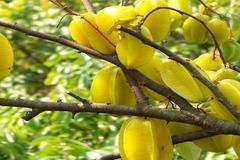 假如上帝给你5棵永远吃不完的水果树,只能选一棵,选哪个?
