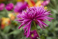 8月财运红得发紫,3生肖事业棒,生意旺,收入越来越好!