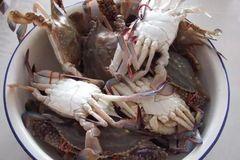 梭子蟹如何挑选?一看二掂三捏,学会这3招,保证又新鲜又肥美