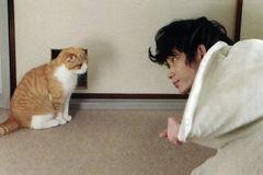 要是分手的话,你们的猫怎么办