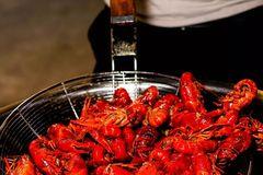 88元吃3斤小龙虾!油焖 、香辣 、蒜蓉都好吃,周末夜宵就来这撸虾!