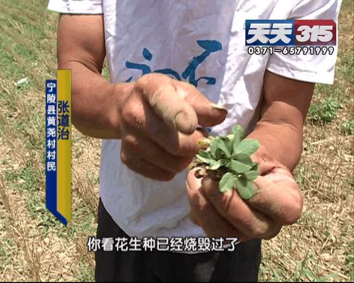 用了花生拌种剂种苗长势成问题