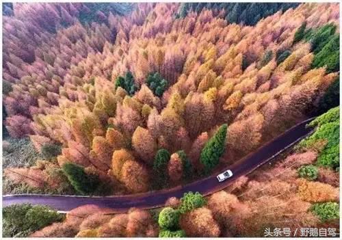 重庆有一条自驾路线,简直美到哭,堪比香格里拉!