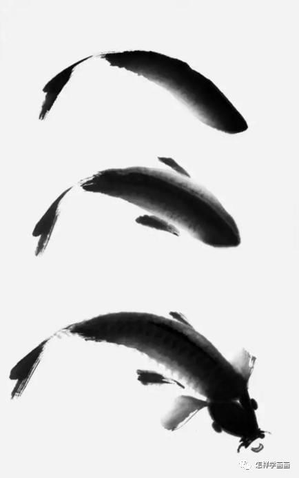 图文教程:写意鲤鱼画法详解