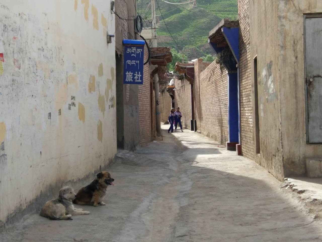 青海有个小县城, 男人在家画画女人在外耕作
