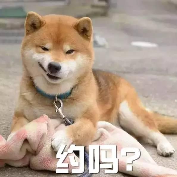 这些狗狗表情包,看过的人都收藏了哟