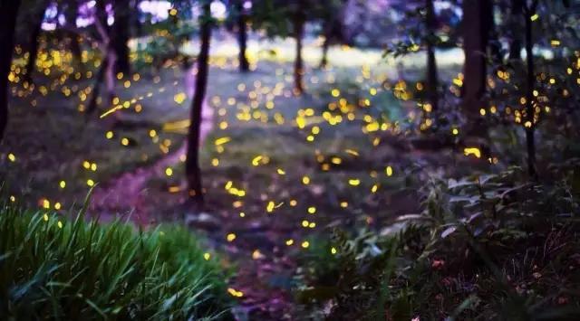 成都周边藏了7个萤火虫秘境,媲美新西兰!
