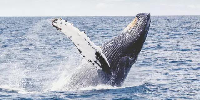 """每年有超过十万头海豚等海洋生物死于""""幽灵杀手"""" - 梅思特 - 你拥有很多,而我,只有你。。。"""