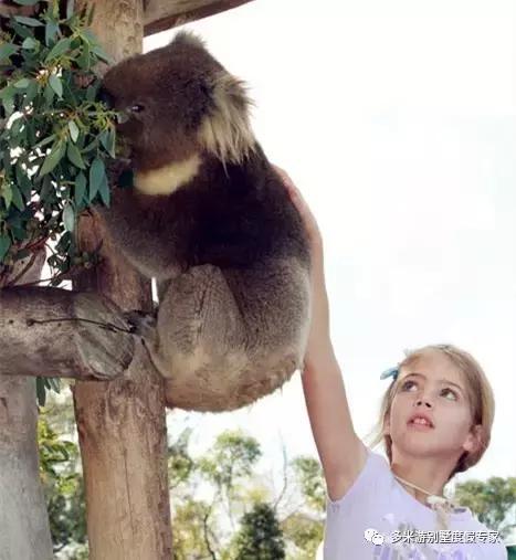全球最值得去的动物园酒店,带娃住进疯狂动物城