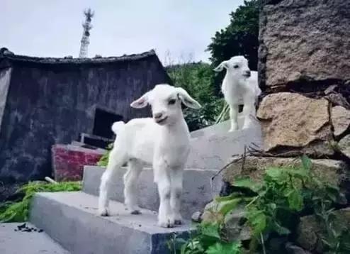 位于浙江舟山的浪漫小岛——欢乐颂2取景地