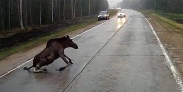 开车撞死动物,究竟应该怎么处理你知道吗? 车家号 发现车生活 汽车...