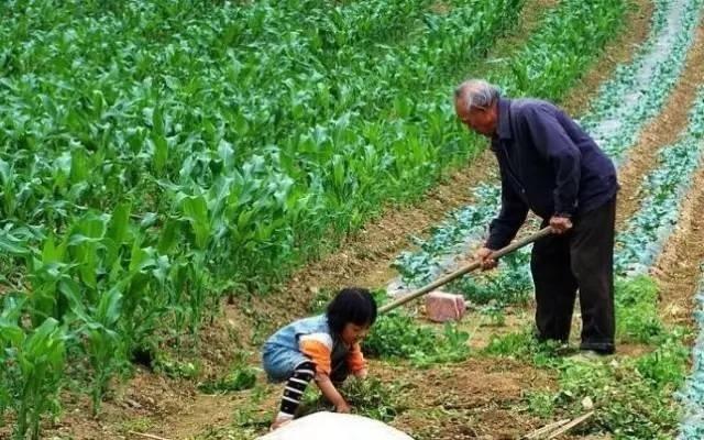 真实的中国农村: 70后不愿种地、80后不会种地、90后不提种地 - 吕西群 - 吕西群博客