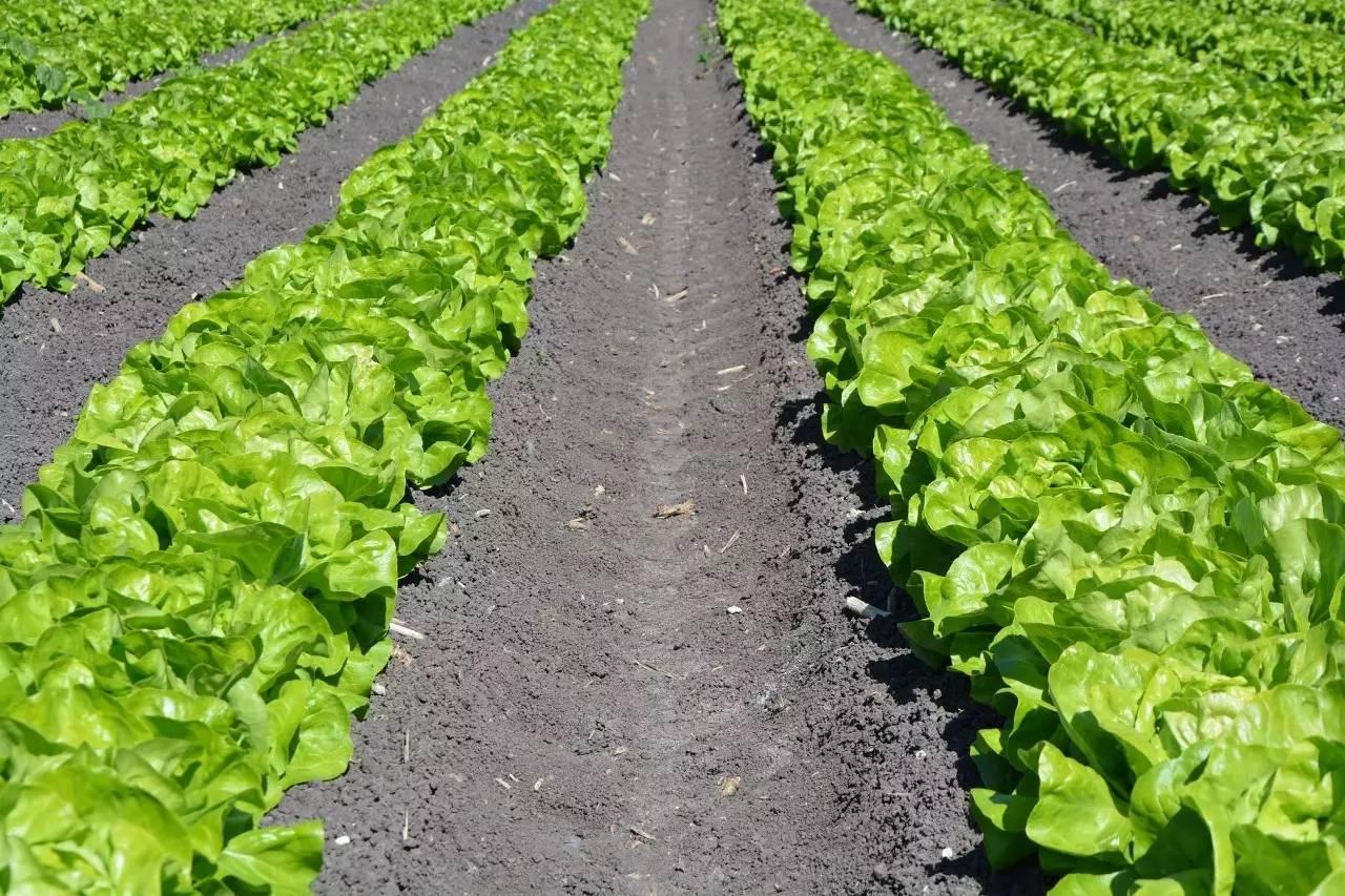 1公顷等于1万平方米_9.6万元每亩地是多少钱一个平方米 平方米
