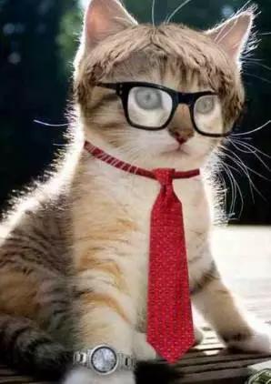 小麒麟觉得猫咪的表情十分符合小伙伴的状态呢.图片