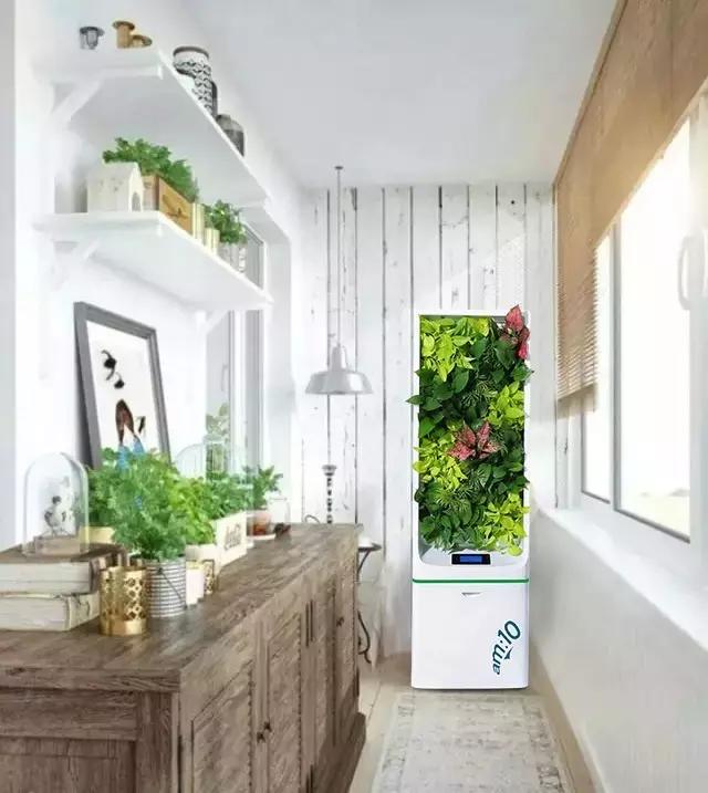 美观而又美味,这些植物考虑种回家吗
