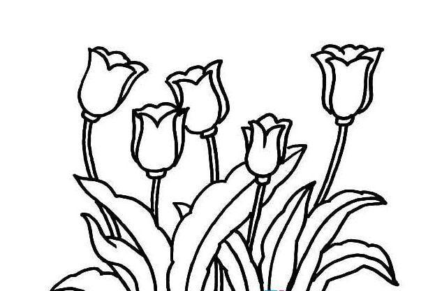 郁金香简笔画画法 怎么画郁金香 简笔画花朵 儿童简笔画图片大全