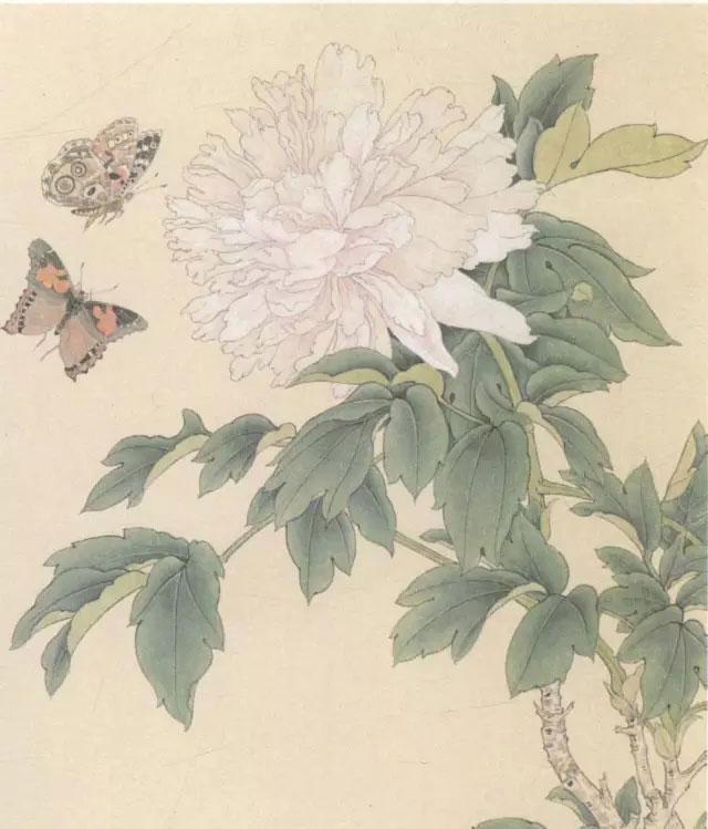 花鸟画工笔的画法 工笔画蝴蝶白描图片上色步骤