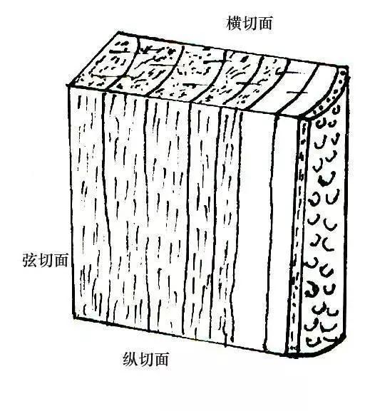 由于木材为非匀质材料,其胀缩变形各向不同,其中以弦向最大,径向次之