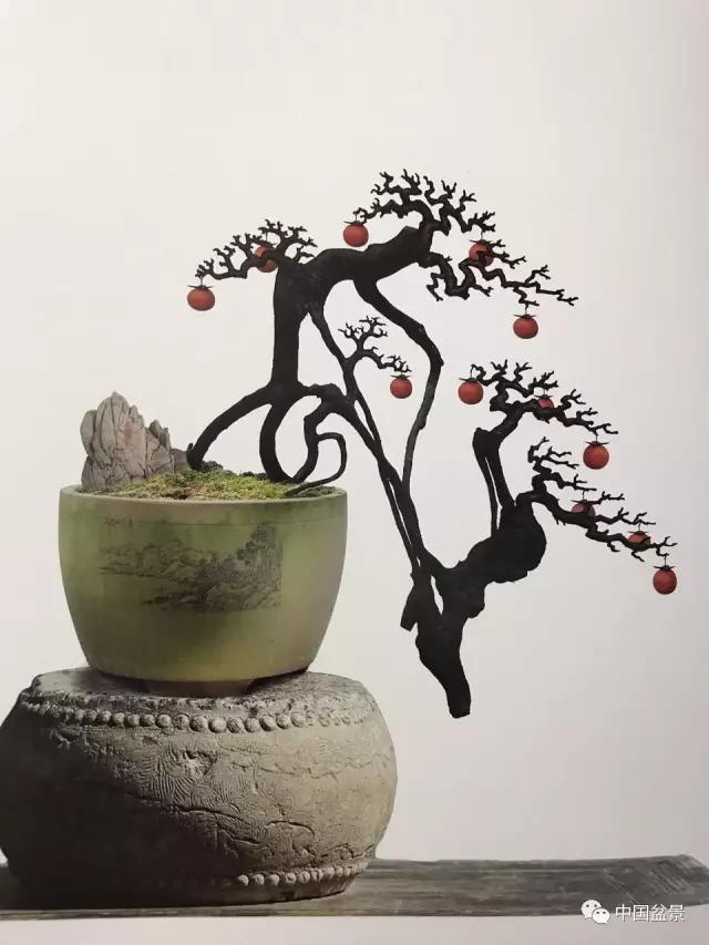 吴清昭金弹子盆景欣赏
