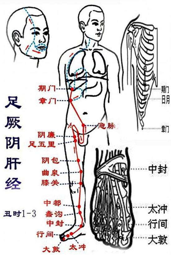 循行走向,足腿部,腹部胸部,经络穴位14个,肝经络不通会引起,乳腺增生