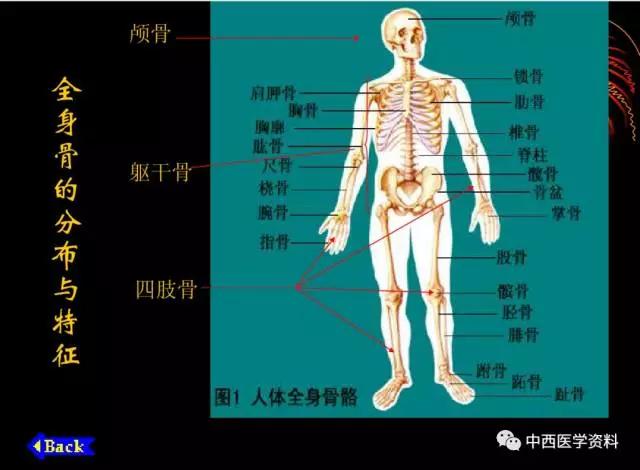 湘湘人体赠藏版_人体解剖学基础知识【珍藏版】