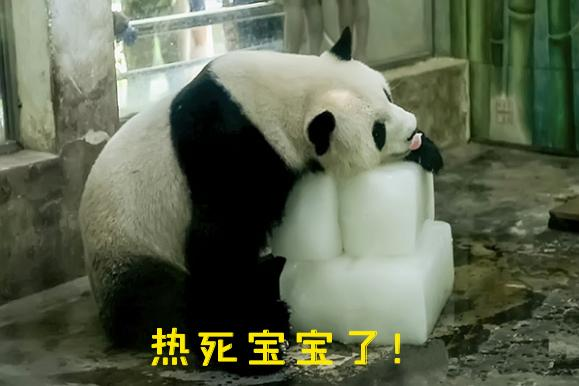 熊猫滚滚表情包,阅读一分钟,开心一整天,超值!图片
