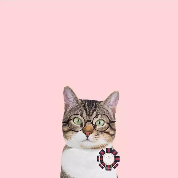 可爱的动物和物品 与粉色结合 做成可爱有趣的手机壁纸 尤其是猫咪